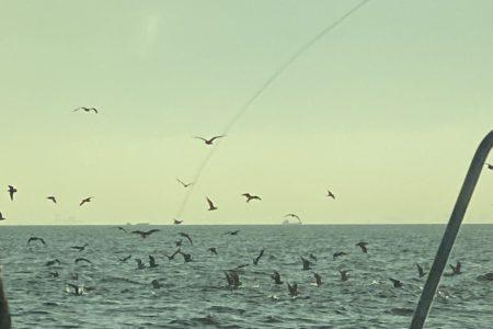 湾奥にサバの群れが来ましたよ!!